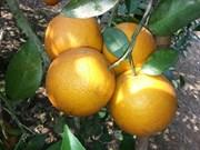"""""""荣橙子""""成为全国境内受保护产品"""