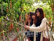 越南大叻市农业旅游颇具游客的青睐
