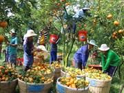 2017年越南蔬果出口额达34.5亿美元 创下新纪录