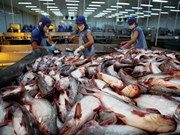 2018年越南将努力扩大查鱼出口市场