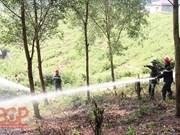 北江省加强森林资源保护管理工作