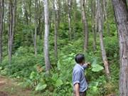 越南人工大木林面积达13万公顷