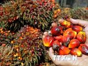 马来西亚棕榈油需求量猛增