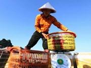 2018年1月份越南农林水产品出口总额超过30亿美元