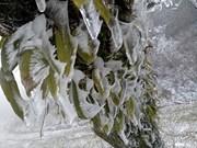 老街省遭严寒天气 多所学校暂时停课