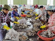 加拿大助力越南茶荣省中小型企业向前发展