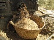 缅甸即将举行稻米产业发展论坛