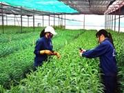 日本援助槟椥省推动有机农业发展