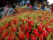 越南诸多农产品成功征服世界高端市场