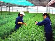 河内市促进高科技农业生产模式建设