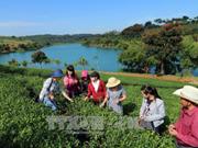 农业旅游 ——大叻市新鲜有趣的旅游模式