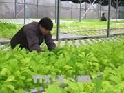 广治省投入1600多亿越盾发展高科技农业