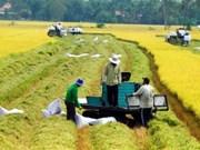 越南农业提出增长目标从2.9至3.05%