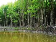 7300余家林业合作社在越南成立