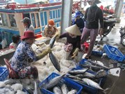 全国水产品捕捞产量喜获丰收