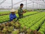 越南绿色蔬菜种植技术征服新加坡市场