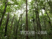 越南森林覆盖面积达1441万多公顷