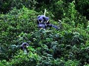 平定省出资保护生物多样性