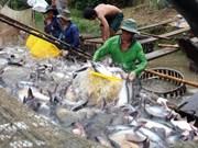 """越南水产为解除欧委会""""黄牌""""警告作出最大的努力"""
