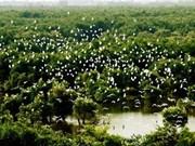 保护在同塔省乌檀白千层树林的珍贵鸟类
