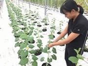 胡志明市力争到2020年农业企业数量为1500家