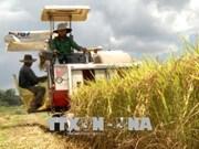 广义省优质有机大米生产协助项目初见成效