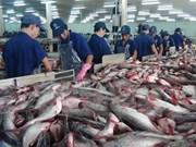 越南查鱼对中国市场出口突飞猛进