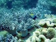 广南省努力保护海洋生物多样性