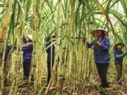 2018年泰国批准减少50万吨糖出口量