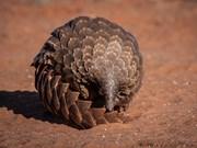 国际生物多样性日:加强对濒危动植物的保护