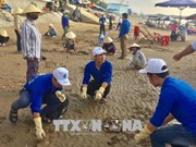 """1000余名青年团员响应""""绿色越南海洋运动""""号召投身净化海洋行动中"""