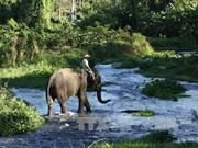 得乐省的象群保护工作