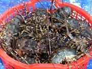 VASEP提议加强虾类产品暂时进口和复出口活动的监管工作