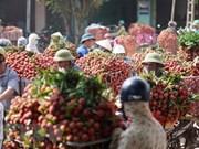 海阳省荔枝出口量约达9500吨