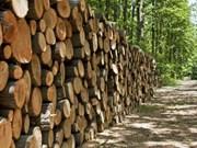 2018年前6个月越南林产品出口额约达 41.5亿美元