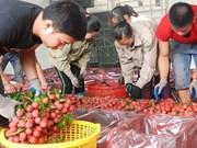越南向逾30个国家出口8.7万吨荔枝