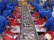 VASEP:越南应加强对出口到中国的查鱼产品质量的监管