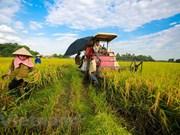 越南农业之画:出现许多亮色