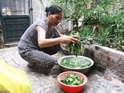 河内市52%农村居民用上安全水