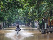 三号台风袭击造成安沛省死亡、失踪和受伤人数达21人