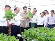 政府总理阮春福探访林同省绿色蔬菜生产模式