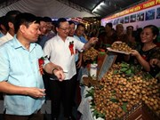 2018年越南兴安省龙眼节吸引数百家国内外企业和商人参观购物