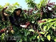 前7月阿尔及利亚自越南进口咖啡总量猛增