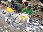 2018年前7个月越南查鱼出口达近12亿美元