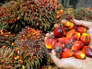 2018年印度尼西亚棕榈油产量将增至4000-4200万吨