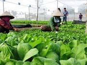 越南出台新法规助力有机农业发展