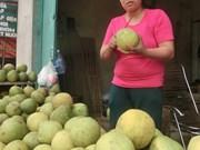 柚子品种多样化助推富寿省端雄县农民脱贫
