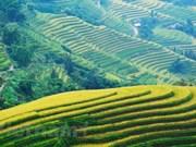 黄树肥正当金秋时节 吸引国内外游客前来游览