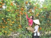 同塔省主动维护果树重点种植区