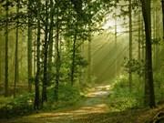 越南政府总理批准《森林可持续管理和森林认证提案》